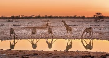 NAMIBIA,<BR> KALAHARI